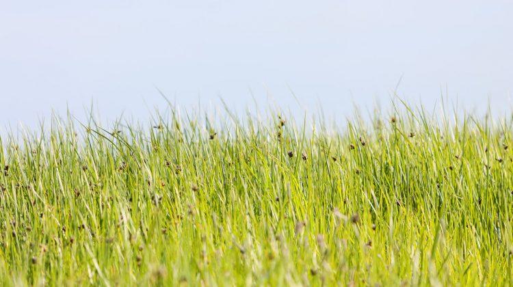 Tips para teñir tu verano de verde sostenible